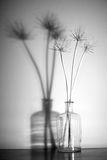 Stems of dry plants Royalty Free Stock Photo