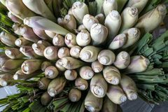Stems of freshly harvested lemongrass in bundles displayed at a greengrocer`s shop. royalty free stock photos
