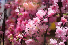 The stems of pink flowers background. Branch flowers Royalty Free Stock Images