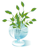 The stems of plants in a transparent glass. A few stalks of green plants are in a transparent glass Royalty Free Stock Photo