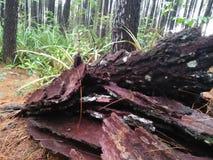Stems from sörjer träd som är i skogen och förfallit fotografering för bildbyråer