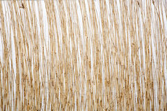 Stems in the water. Close up creating a pattern Royalty Free Stock Image