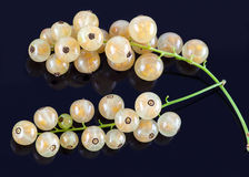 Stems of white currants Stock Photos