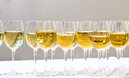 Stemware of champagne on a white table. Banquet Royalty Free Stock Image