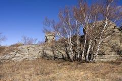 sten för arshihaty skog för område scenisk arkivbild