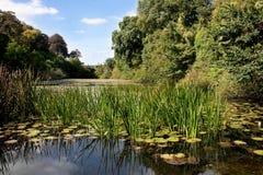 sten för damm för grön lilja för bro sunlit frodig Royaltyfria Foton