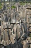 Sten Forest National Park Arkivbilder