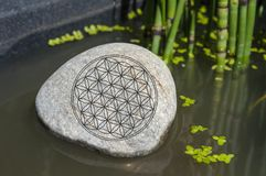 Sten i en skog med mossa, solljus med symbolblomman av liv royaltyfria bilder