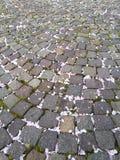 Sten malt täckas med den stupade blomman arkivbild