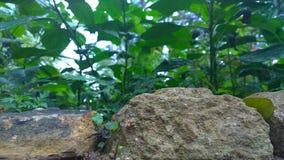Sten med gräsplan Arkivfoton