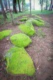 Sten med moss Arkivfoto