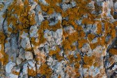 Sten med röd mossa Arkivfoton