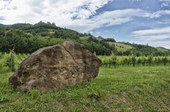 Sten med wineyard Royaltyfri Fotografi