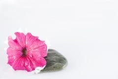 Sten och blomma arkivbild
