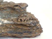 Sten och kadavret eller fossilen Arkivbilder