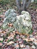 Sten och lövverk arkivbild