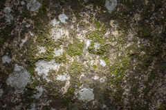Sten- och mossatextur Arkivfoton