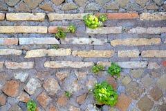 Sten- och tegelstenvägg, Rome Italien Arkivbild