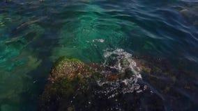 Sten- och vattenväxter i havet stock video