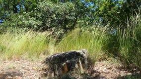Sten på Ayu-Dag i fjädergräset stock video