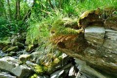 Sten på floden Royaltyfri Foto