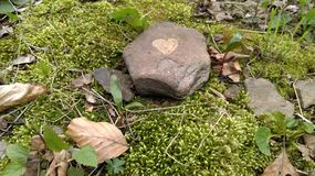 Sten på mossa Royaltyfria Bilder