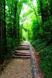 Sten-stenlagd trappuppgång i en skuggig gränd Kvalitets- foto royaltyfri fotografi