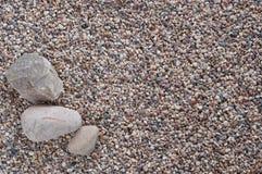 Sten tre på densteniga stranden Royaltyfria Bilder