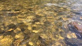 Sten under klart vatten Stenar under flöde för flodvatten lager videofilmer