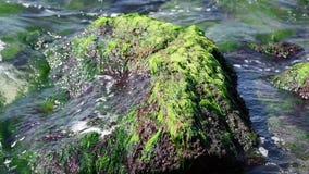 Stena att klibba ut ur dagen för sommar för havsvatten stock video