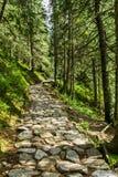 Stena banan mellan träden i bergen Royaltyfria Foton