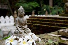 Stena Buddhastatyn med mossa och Frangipaniblommor Royaltyfria Bilder
