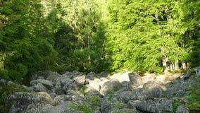 Stena floden som det naturliga fenomenet i naturliga Vitosha parkerar nära Sofia, Bulgarien Det guld- broområdet arkivfilmer