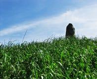 Stena kvinnan, menhir, i det gröna gräset Arkivbilder
