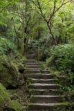 Stena trappa i en frodig och grönskande skog Arkivfoton