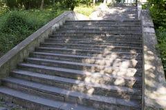 Stena trappuppgången med ilsken blick från solen under grönskan Royaltyfri Foto