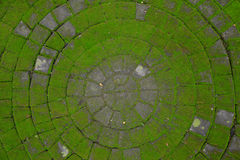 Stena vägen som täckas med mossa i formcirkeln Fotografering för Bildbyråer