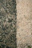 stenar den gammala rullningen för den svarta durken white Royaltyfri Bild