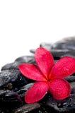 stenar den täta extrema blomman för black upp zen Royaltyfria Bilder