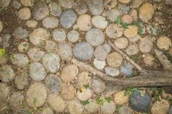 Stenar, gräs och växten rotar på jordning som används som bakgrund och textur royaltyfria foton