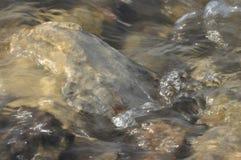Stenar i floden snabbt flödande vatten Uppfriskande bergflodström Strömmen av kristallklart vatten Arkivfoton