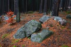 Stenar i skog arkivbilder