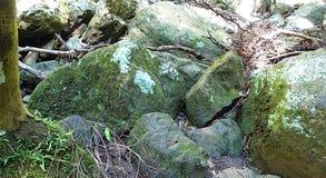 Stenar i skog fotografering för bildbyråer