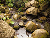 Stenar i träskogström i gdansk oliva parkerar Fotografering för Bildbyråer