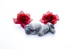 Stenar med steg blomningar Royaltyfri Foto
