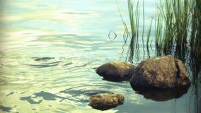 Stenar och gräs i sjön royaltyfri bild