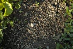 Stenar och lera Royaltyfria Bilder
