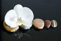 Stenar och orchid Royaltyfri Fotografi