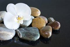 Stenar och orchid arkivbilder