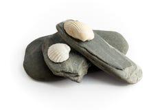 Stenar och snäckskal Arkivbild